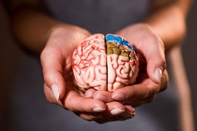 Makanan Yang Dapat Meningkatkan Kinerja Otak
